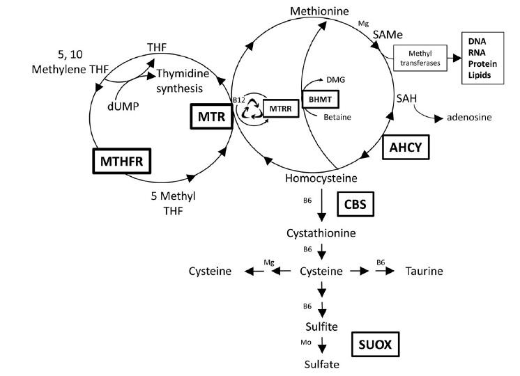 中立的なマルチビタミン(サプリメント)情報を教 …